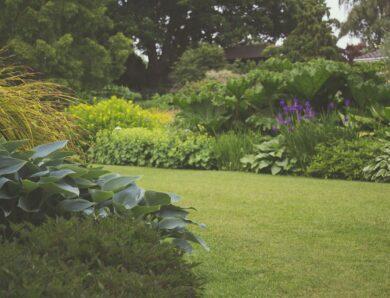 Hoe bereid je jouw tuin voor op de zomer?