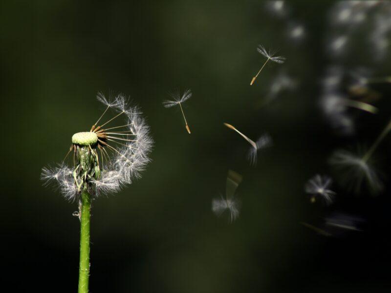Je tuin onderhouden in de lente in 3 eenvoudige stappen